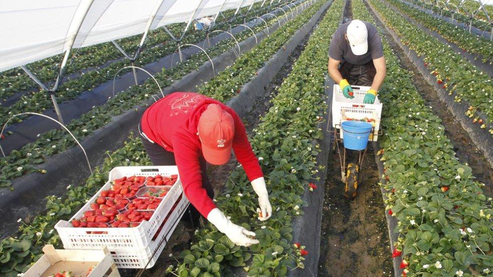 احدي المزارع الكبري بالامارات تعلن عن حاجتها لعدد من عمال مصريين مقيمن